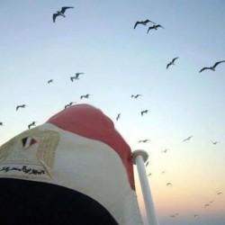 لوحة طير مصر